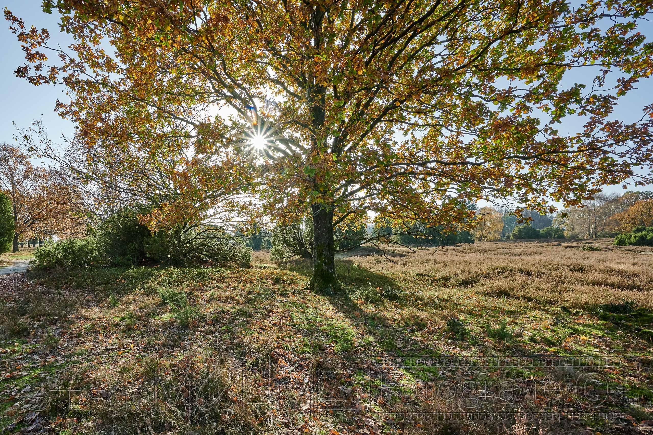 Lüneburger Heide,Natur,Landschaft