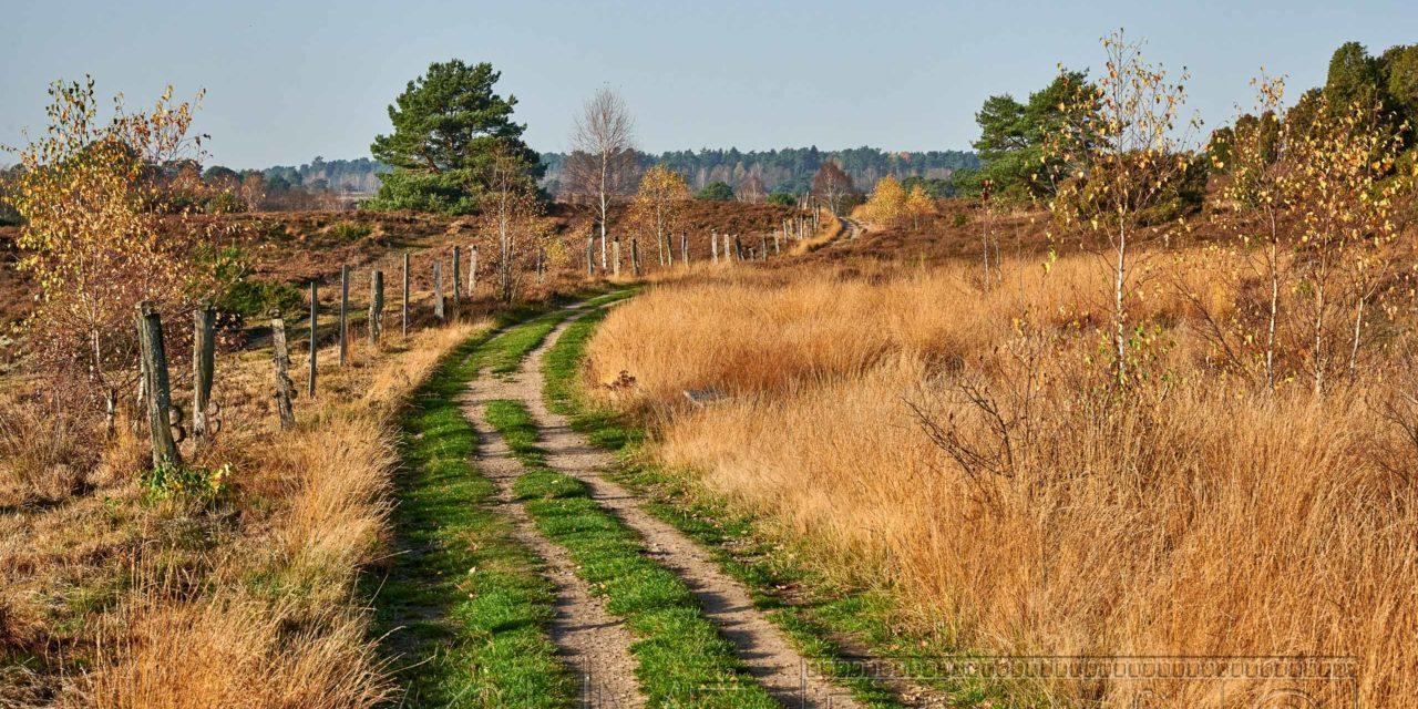 Lüneburger Heide Undeloh, Totengrund Wilseder Berg Rundwanderung.