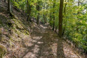 Nationalpark, Kellerwald Edersee, Urwaldsteig