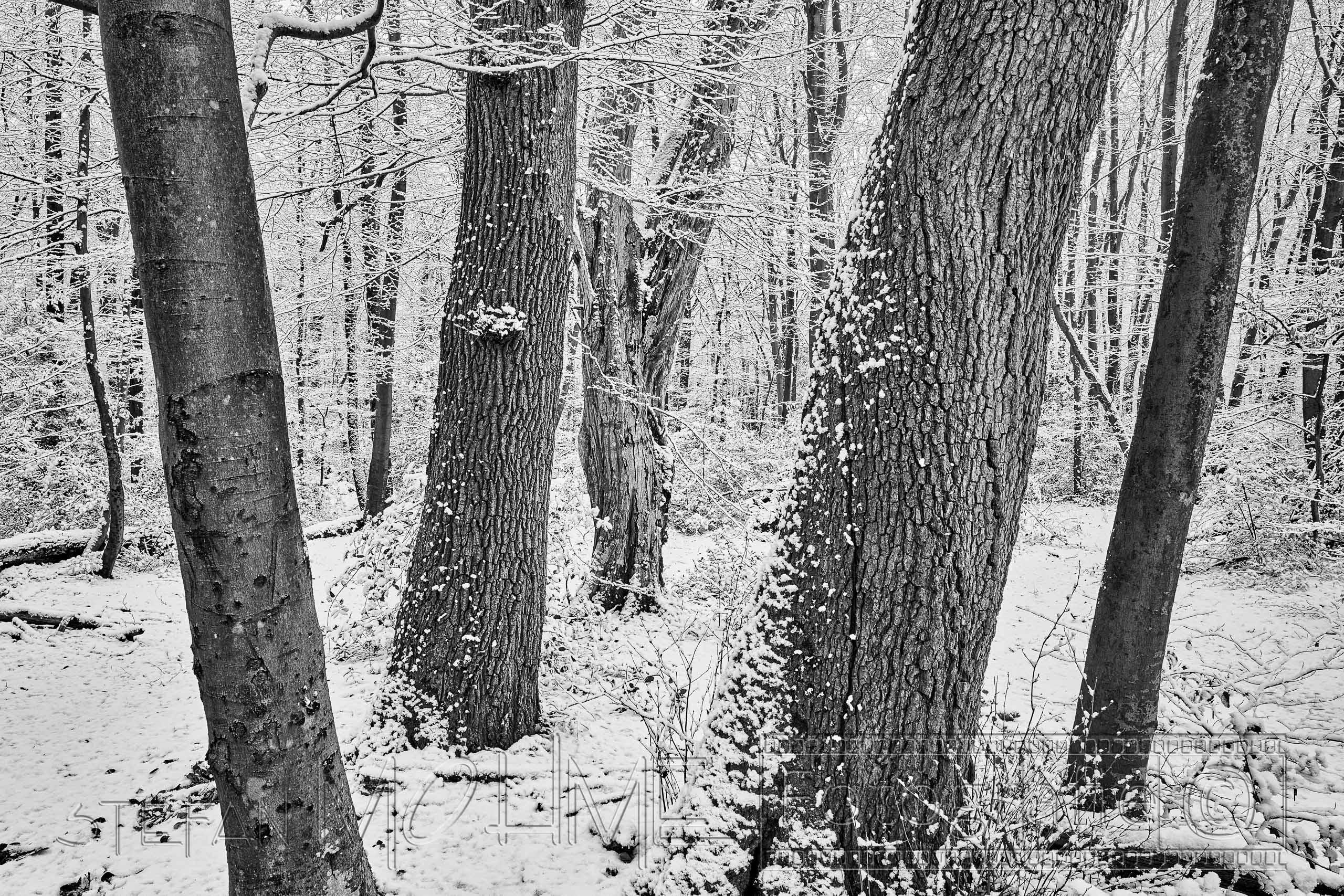 Schwarzweiss, Baumstamm, nahaufnahme