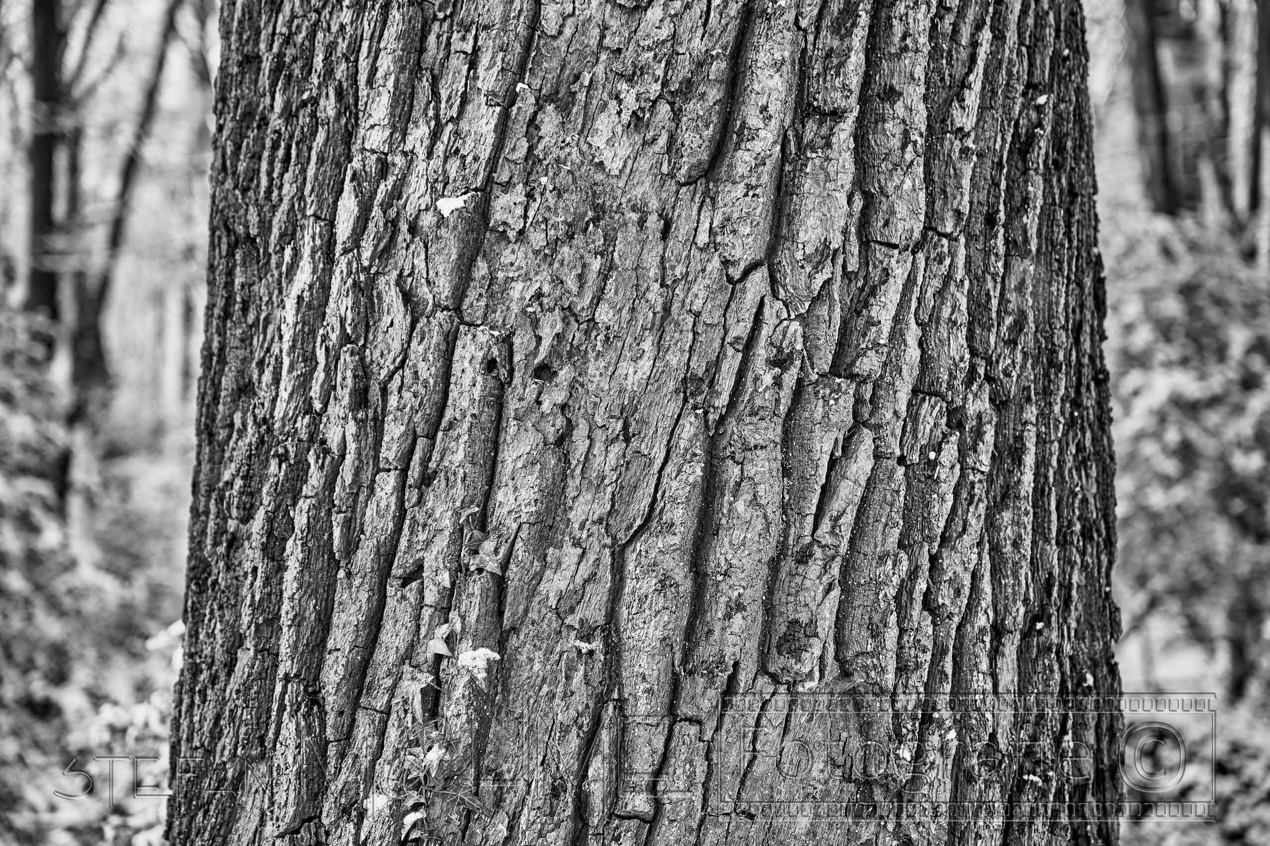 Schwarzweiss ,Baumstamm, nahaufnahme