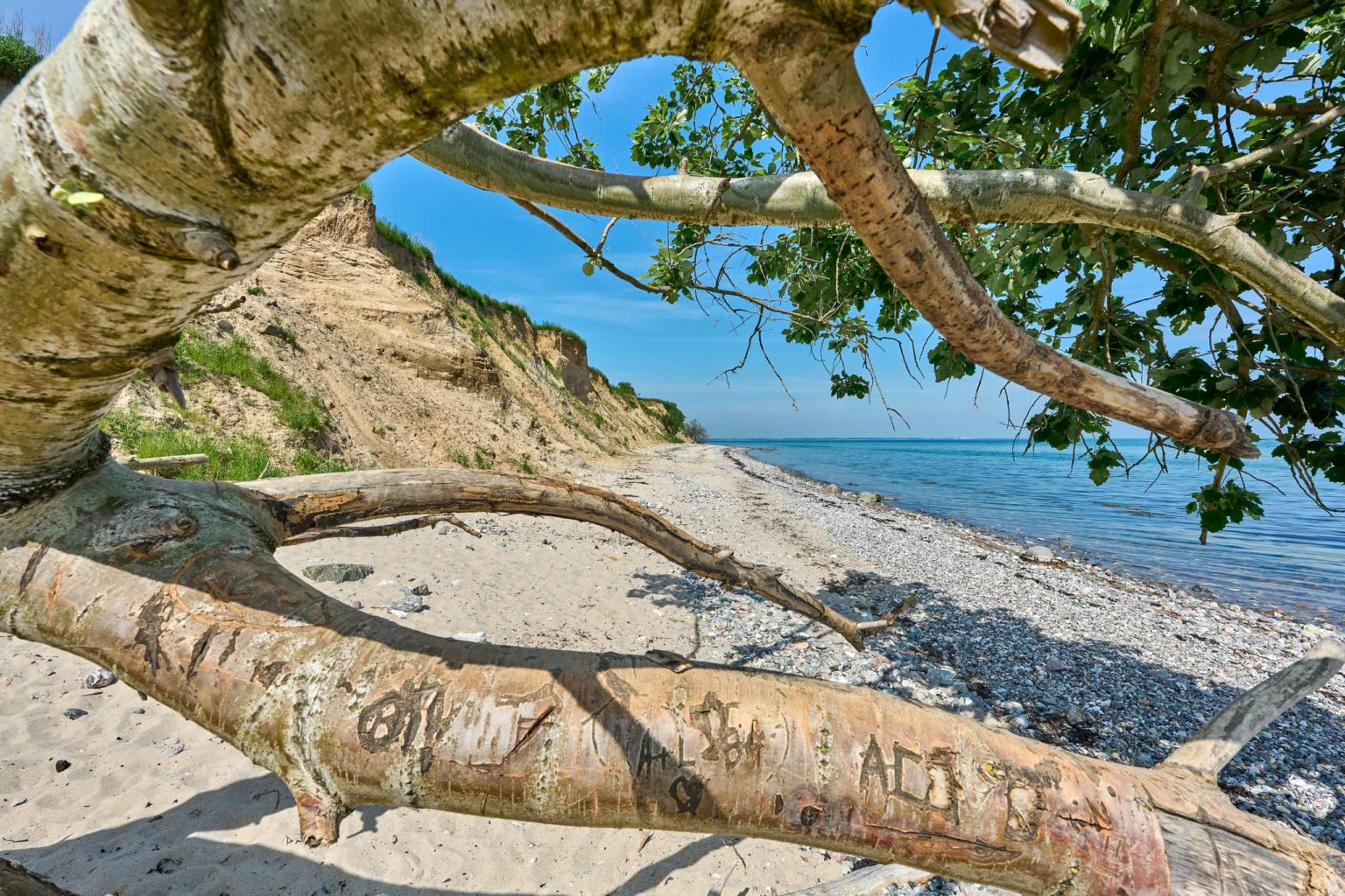 Totholz, Strand, Steilküste, Ostsee