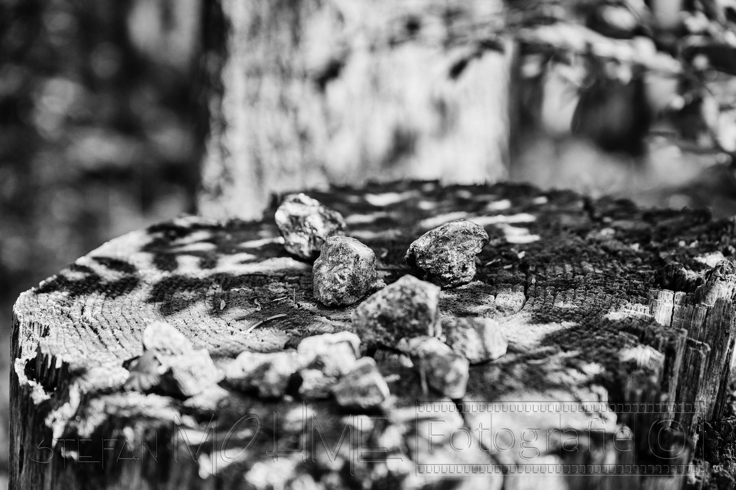 Steine , Baumstumpf , Schwarzweiss