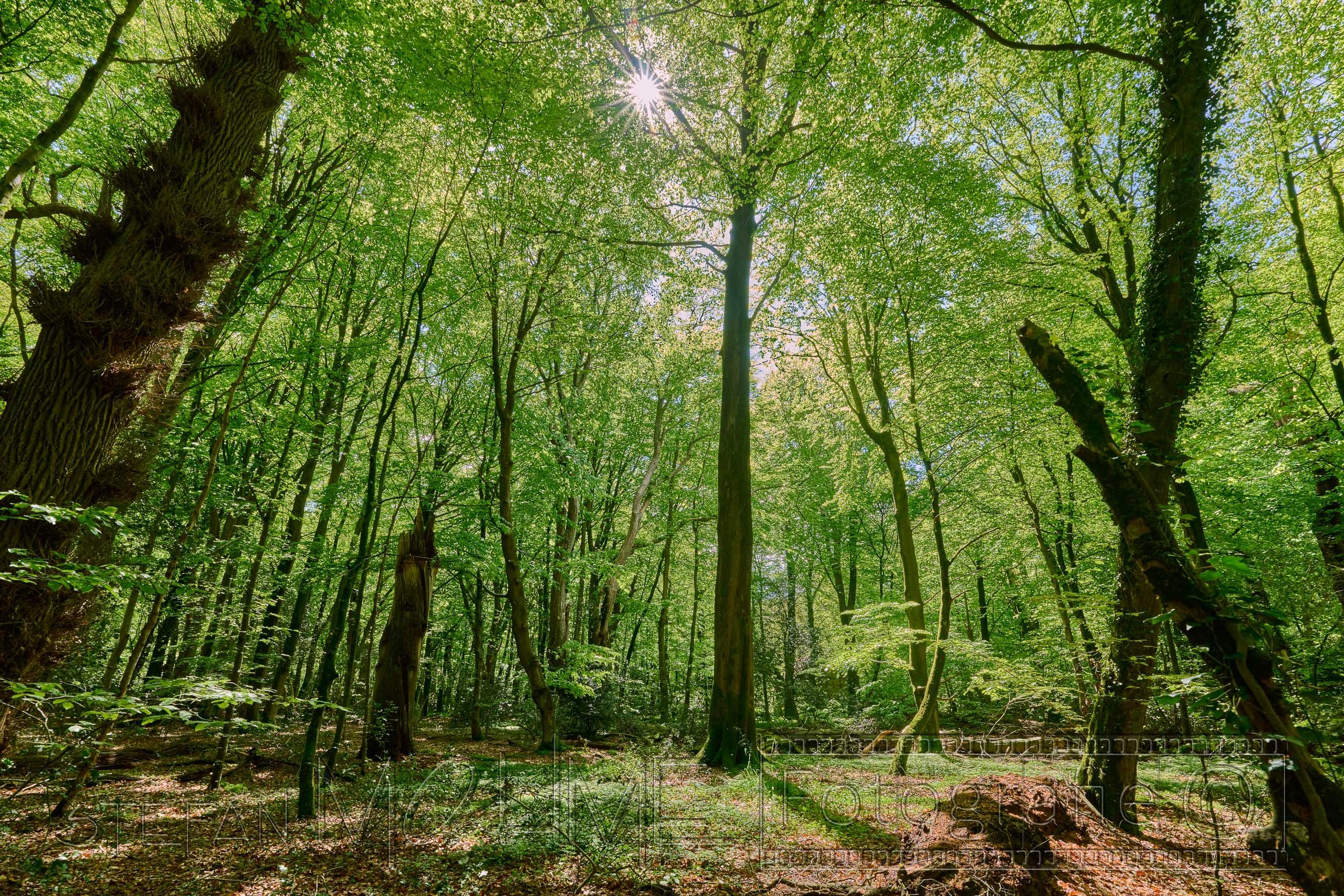 Neuenburger Urwald,Natur,Landschaft,Wald